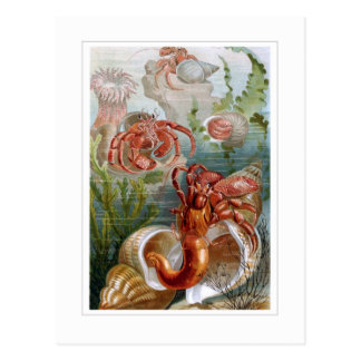 Hermit Crab Post Card