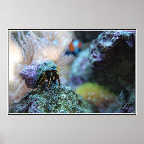 Hermit Crab Poster print