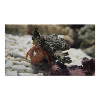 Hermit Crab Posters