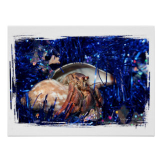 Hermit crab with blue Christmas Holiday tinsel Poster