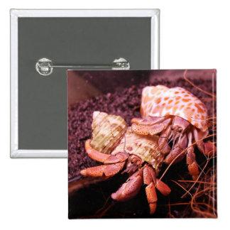 Hermit Crabs Button