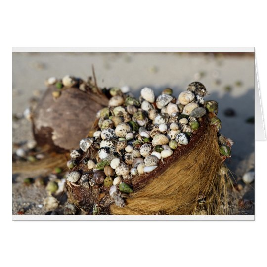 Hermit crabs in coconut shell card