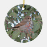 Hermit Thrush Christmas Ornaments