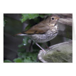 Hermit Thrush Stationery Note Card