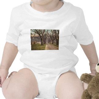 Hermitage plantation Savannah Georgia Baby Creeper