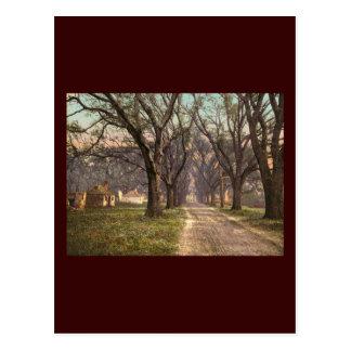Hermitage plantation Savannah Georgia Post Card