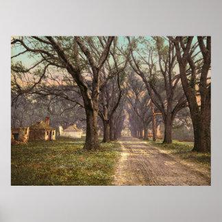 Hermitage plantation Savannah Georgia Posters