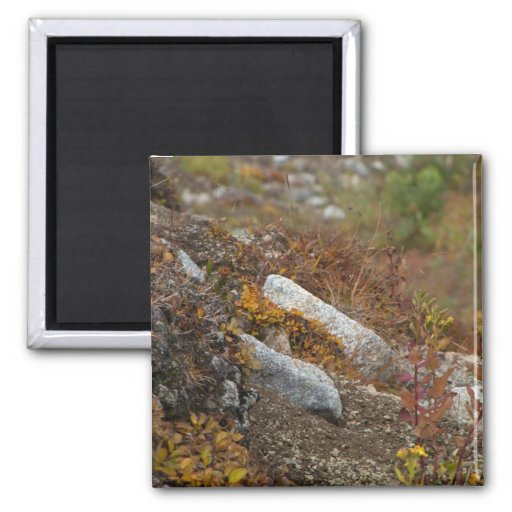 Hermosa Hillside 2 Inch Square Magnet