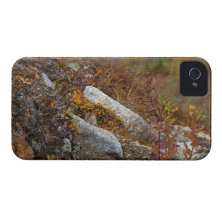 Hermosa Hillside Case-Mate iPhone 4 Case