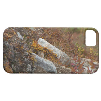 Hermosa Hillside iPhone SE/5/5s Case