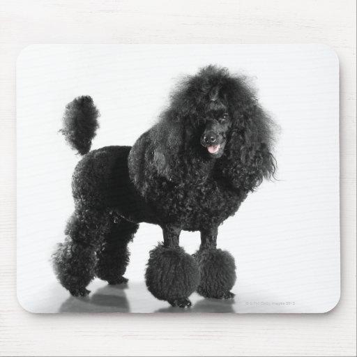 Hermoso, arreglado, negro, cuerpo completo del can alfombrillas de ratones