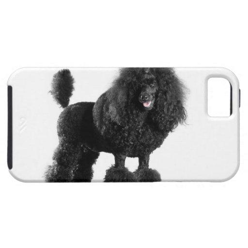 Hermoso, arreglado, negro, cuerpo completo del can iPhone 5 fundas