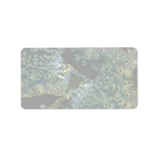 Hermoso el sifón y la capa de una almeja del Trida Etiquetas De Dirección