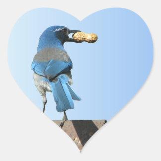 Hermoso friegue el pájaro de Jay Pegatina En Forma De Corazón