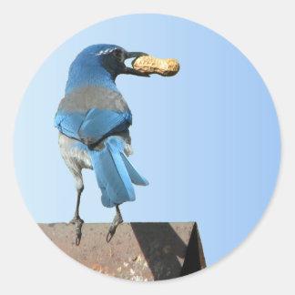 Hermoso friegue el pájaro de Jay Pegatina Redonda