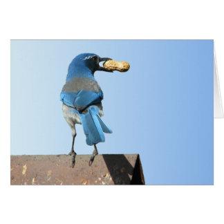 Hermoso friegue el pájaro de Jay Tarjeta De Felicitación