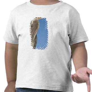 Herodias) del Ardea de la garza de gran azul Camisetas