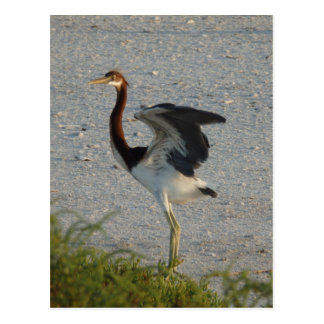 Heron Chick Postcard