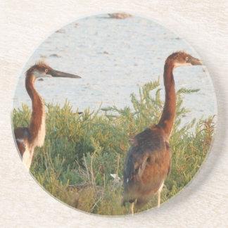 Heron Chicks Coaster