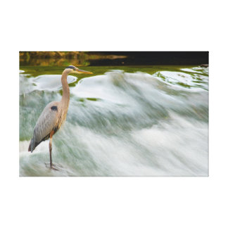 Heron fishing at Olmstead Falls, Ohio Canvas Print