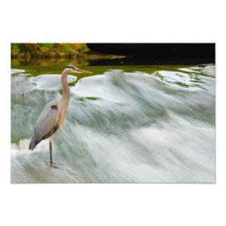 Heron fishing at Olmstead Falls, Ohio Photo Print