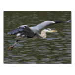 Heron Fly Past 4.25x5.5 Paper Invitation Card