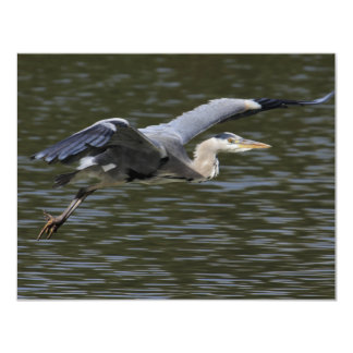 Heron Fly Past Card