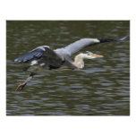 Heron Fly Past Custom Flyer