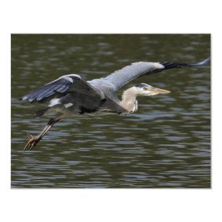 "Heron Fly Past 4.25"" X 5.5"" Invitation Card"