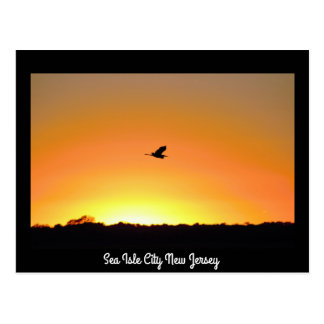Heron Flying at Sunset in Sea Isle City New Jersey Postcard