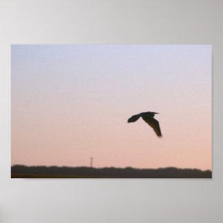 Heron Flying Photo Poster