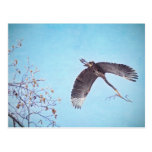 Heron Flying with Branch for Nest Post Card