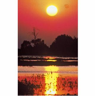 Heron in Sunset Photo Cutout