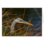 Heron in the grass cards