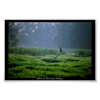 Heron in The Great Swamp Poster