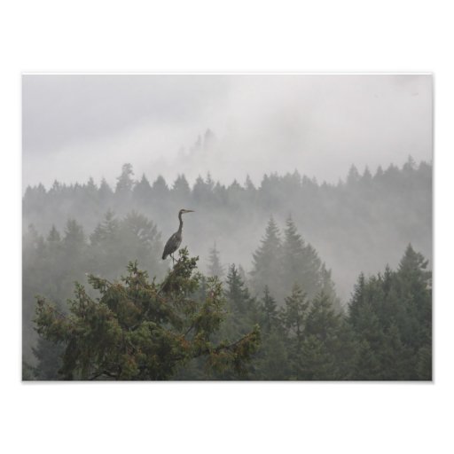 Heron in the Mist Photo Print