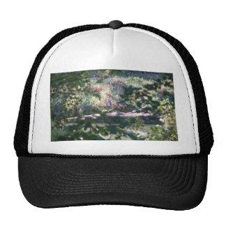 Heron in the woods hat