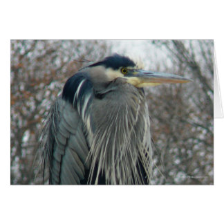 Heron in Winter Card