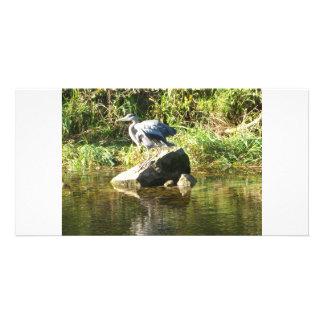 Heron on a rock photo greeting card