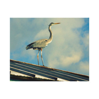 Heron on a Roof Gallery Wrapped Canvas