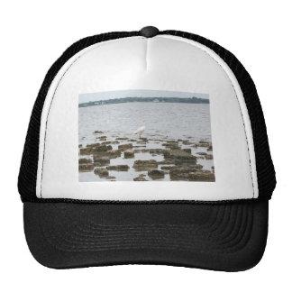 Heron on Shore Hat