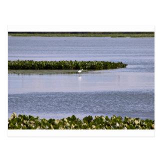 Heron on the Lake Postcard