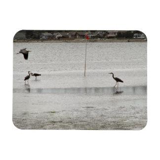 Heron Party Rectangular Photo Magnet