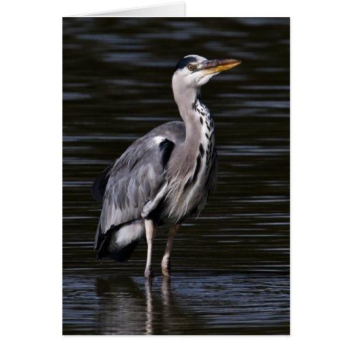 Heron Portrait Card