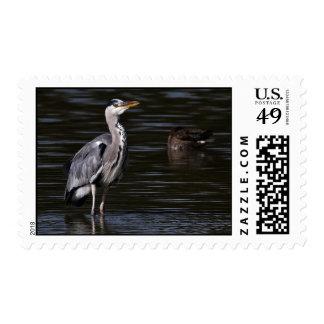 Heron Portrait Postage