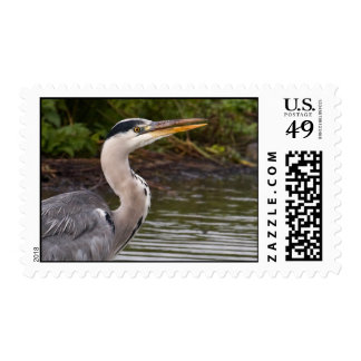 Heron Postage