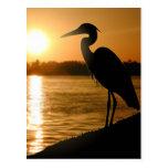 Heron Postcards