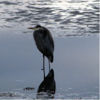 Heron Reflected Photo Statuette