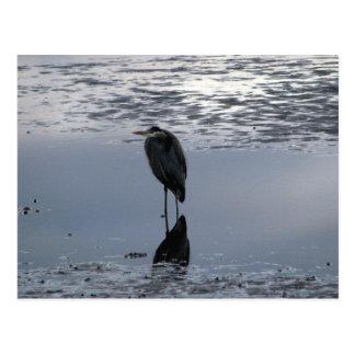 Heron Reflected Postcard