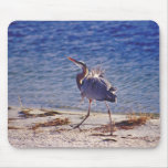 Heron running on beach mouse pads